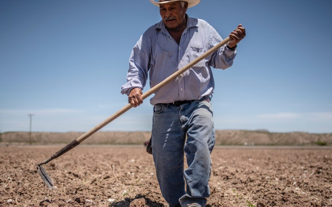 Report: Healthy soil, local food systems key for NM agriculture