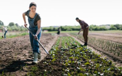 For Small Farms Surviving the Pandemic, Co-ops Are a Lifeline
