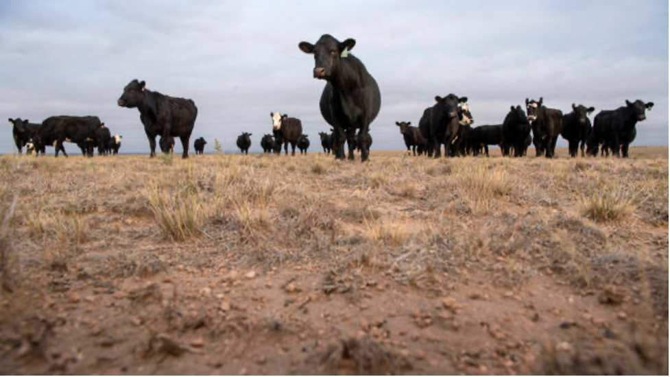 New Mexico ranchers face historic drought