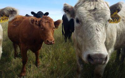 North Dakota Industrial Commission authorizes Bank of North Dakota loan programs for livestock producers